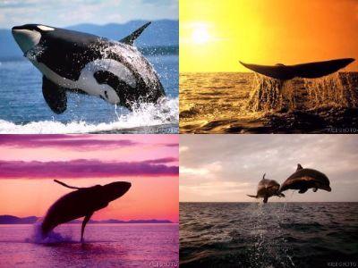 http://www.costa-luz.com/mediac/400_0/media/DIR_40301/Whale%7Emontage.jpg
